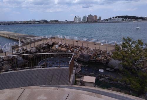 江ノ島の磯遊び穴場1